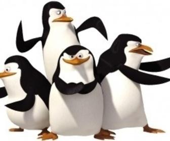 Orange Carpet - Pingouins de Madagascar